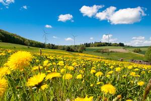Weilrod_Windpark_Löwenzahn